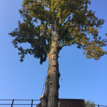 Tree-Felling-2-350x350