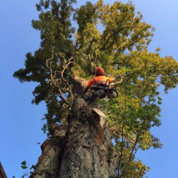Tree-Felling-3-350x350