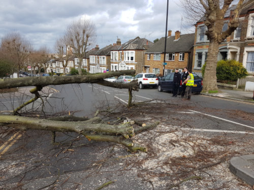 Tree-blocking-road-1-