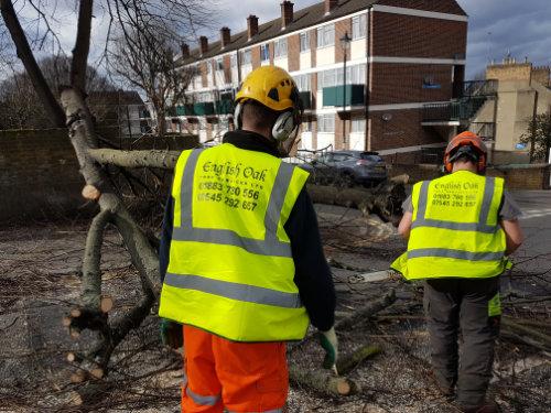 Tree-blocking-road-2-