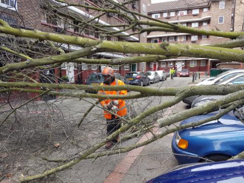 Tree-on-Car-3